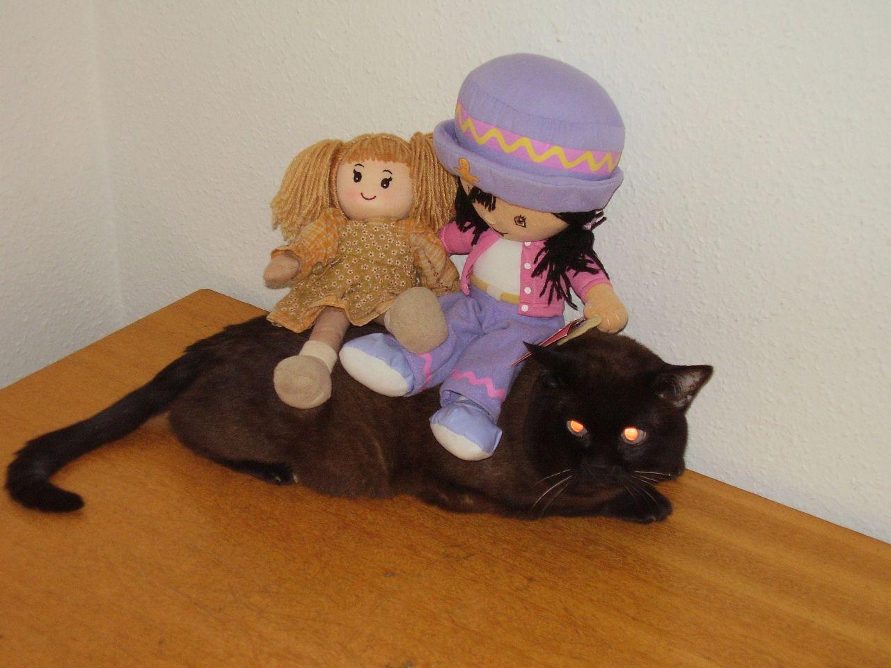 [Image: gingersnap_plush_cat2.jpg]